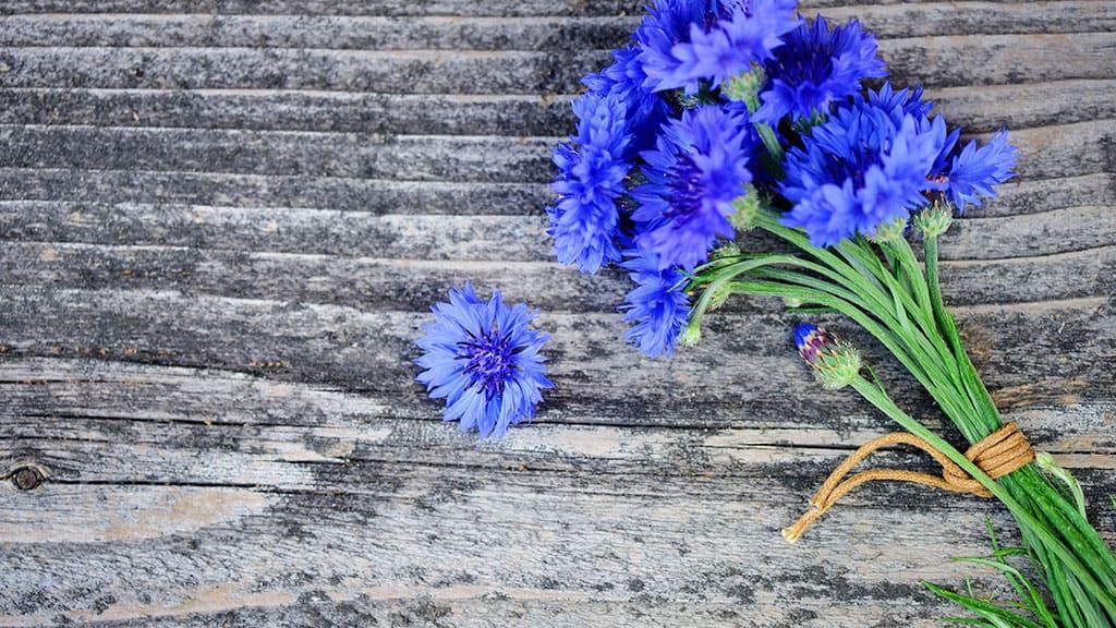 flowers-wood-banner.jpg